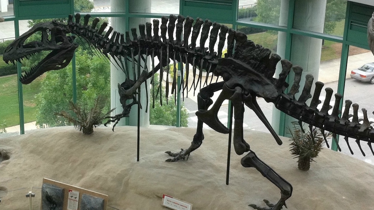Un squelette d'Acrocanthosaurus, au North Carolina Museum of Natural Sciences (États-Unis) ©bazusa